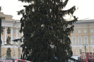 украсили елку на дворцовой