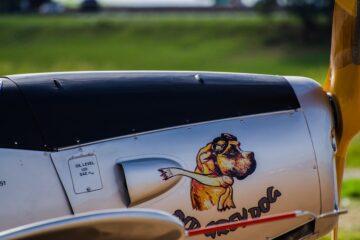 перевозка собак в самолетах
