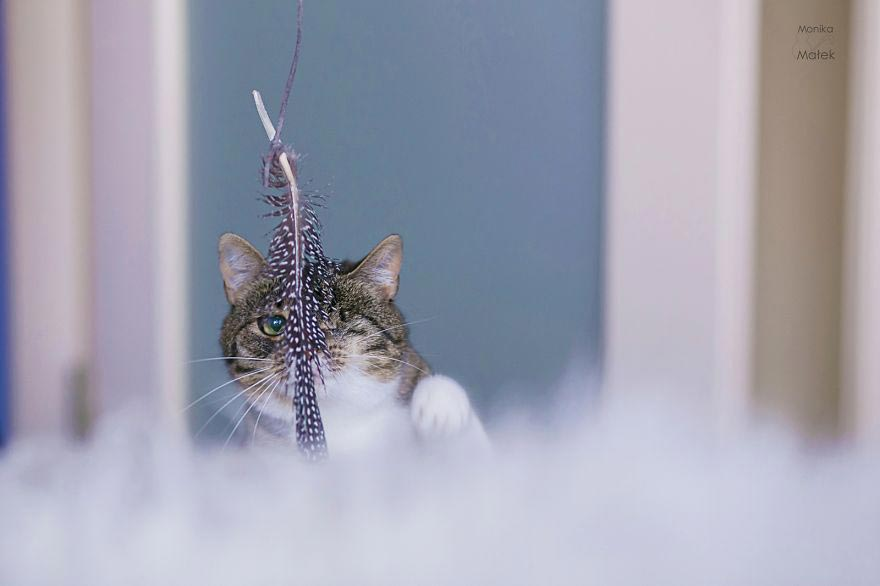 кошки инвалиды