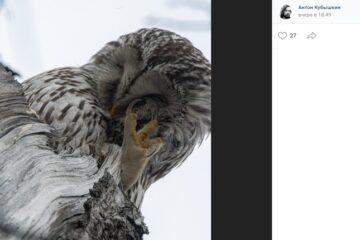 фотограф и совы