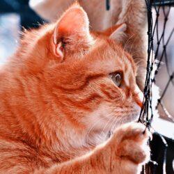 профсоюз для котов