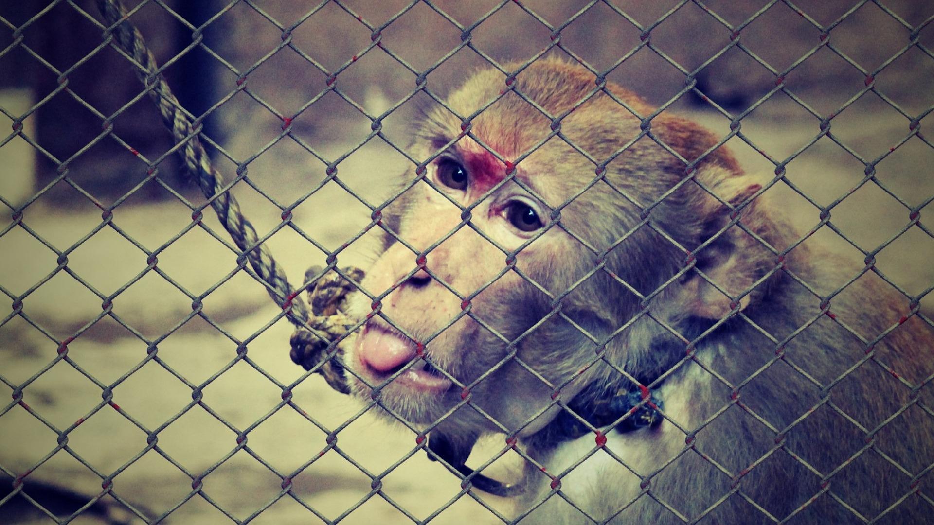 европейская конвенция о защите животных