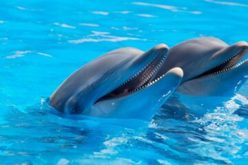 дельфины и дельфинарии