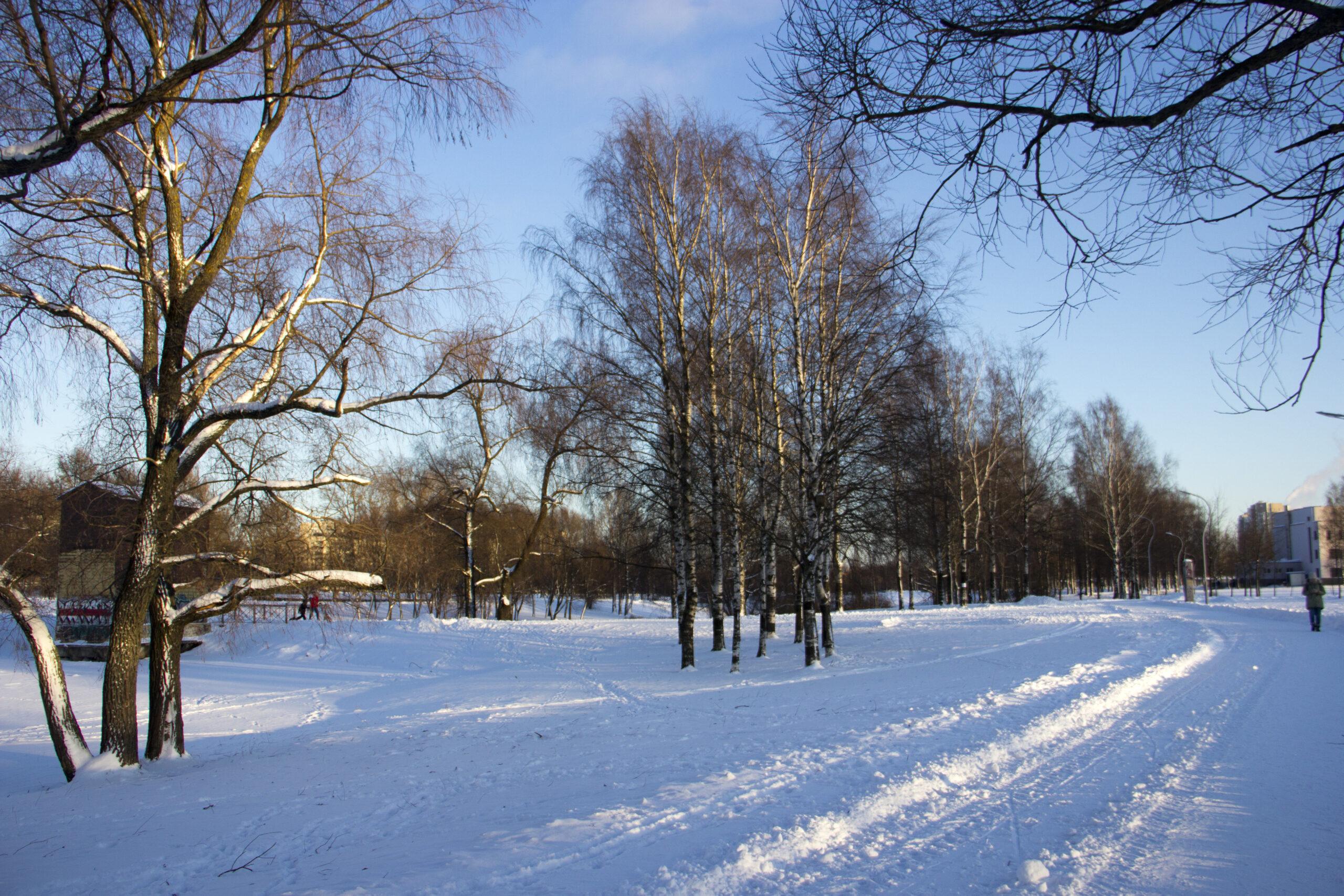 Муринский парк и Ржевский лесопарк в Санкт-Петербурге получат защиту от застройки
